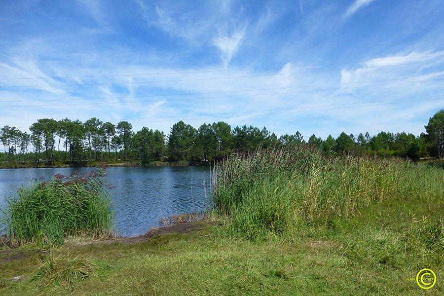 étang-de-Beauchamps,-Mios-02-33