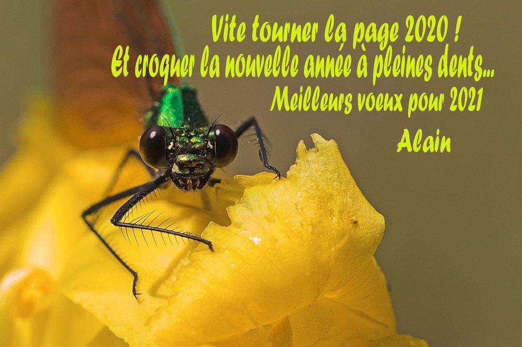 Voeux Alain
